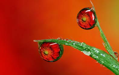 Dew Drop Refraction 25 by Alliec
