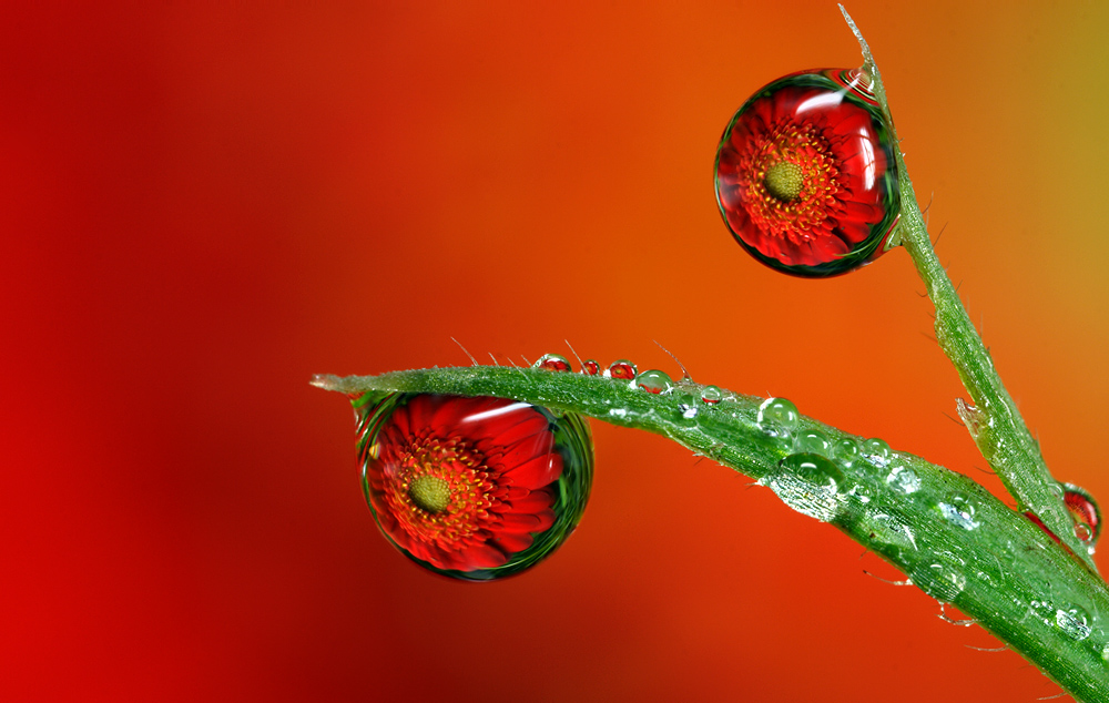Dew Drop Refraction 25