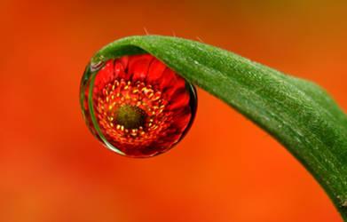 Dew Drop Refraction 27 by Alliec