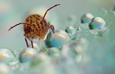 Globular Springtail 28 by Alliec