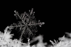 Snow Flake 2 by Alliec