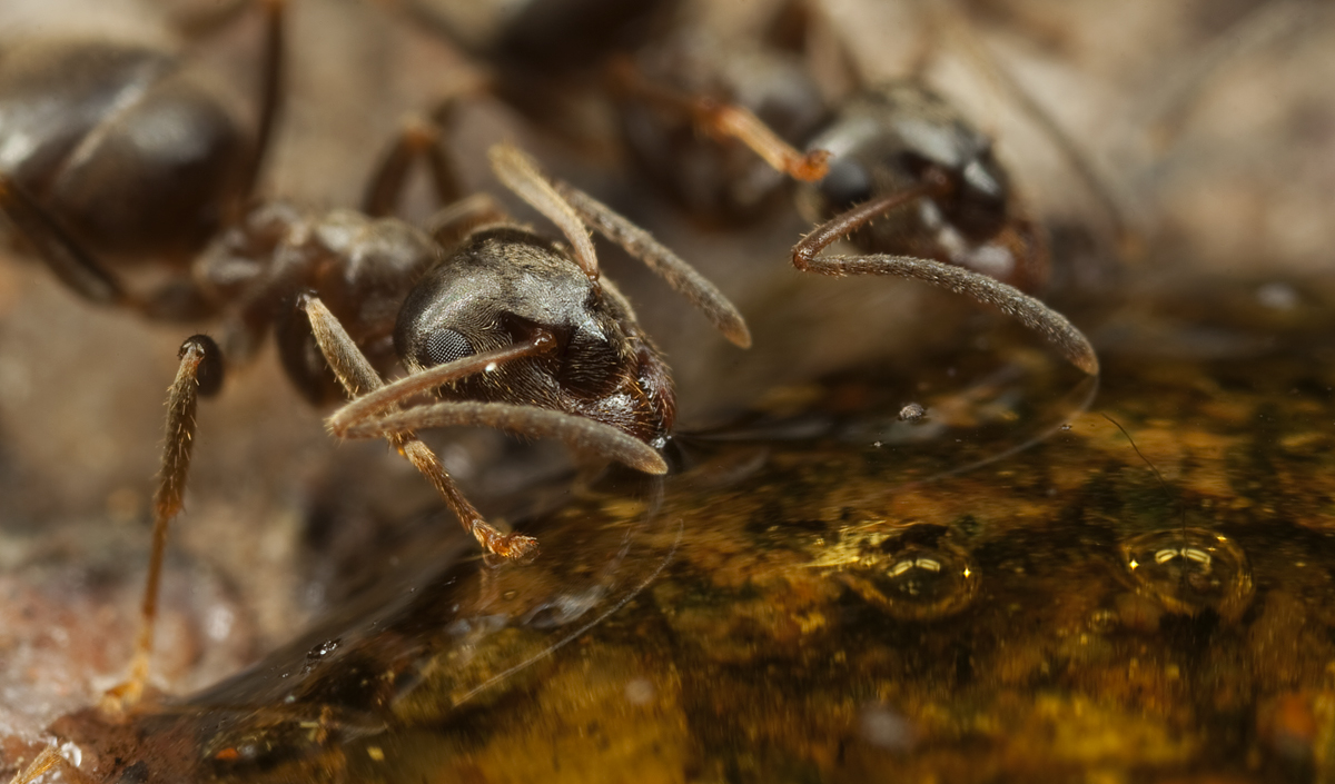 Ants 5