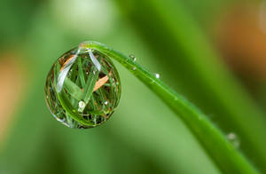Dew Drop Natural by Alliec