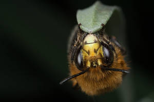 Bee 10 by Alliec