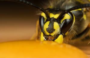 Wasp Queen by Alliec