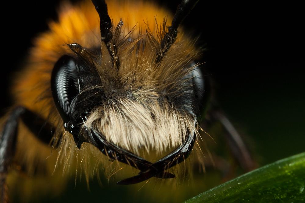 Miner Bee 4 by Alliec