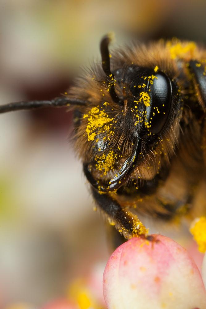 Miner Bee 1 by Alliec