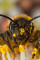 Miner Bee 2 by Alliec