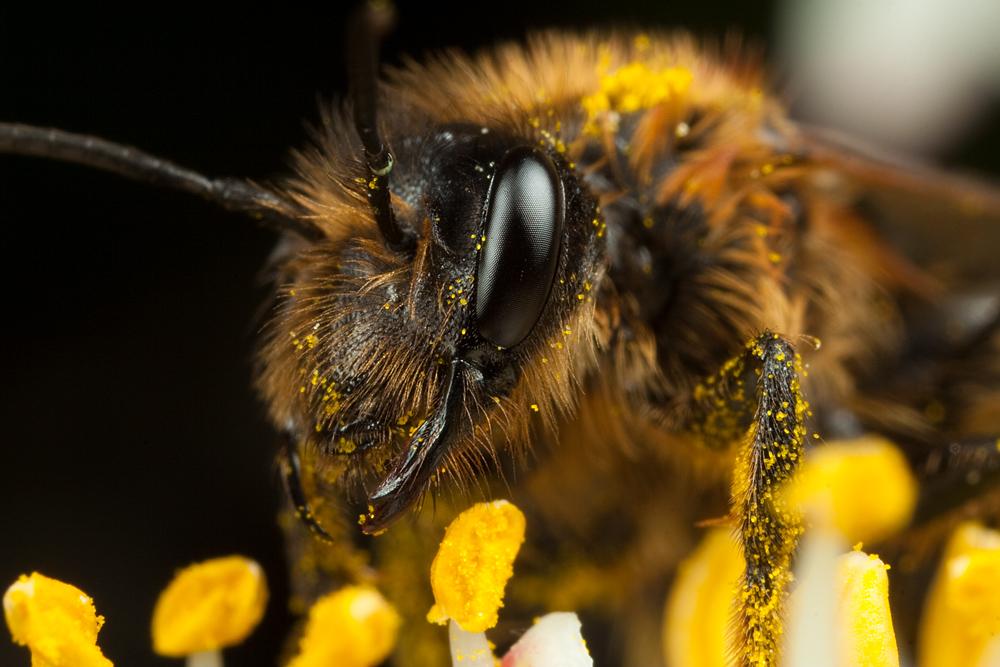 Miner Bee 8 by Alliec