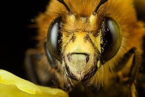 Bee 12 by Alliec