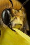 Bee 13