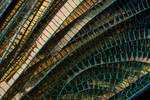 Banded Demoiselle Wing Detail