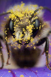 Pollen Loaded 2