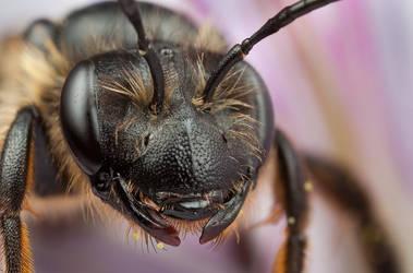 Mad Bee 2