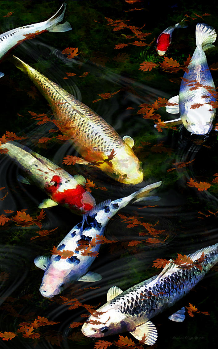 Falling Leaves On Koi by Wolffboy