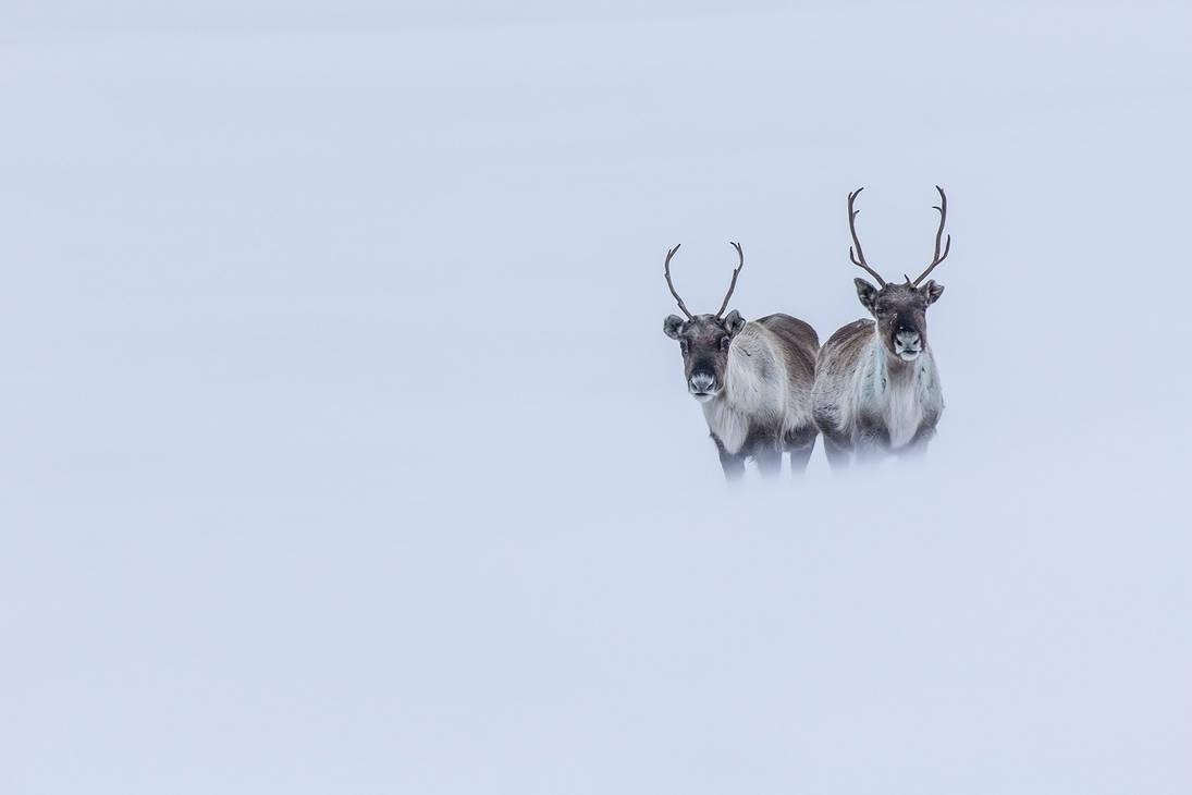 Snowblind by villekroger