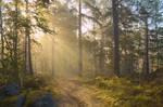 Satra. Foggy morning. Shot 3