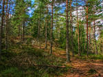 Gommarens forest hdr