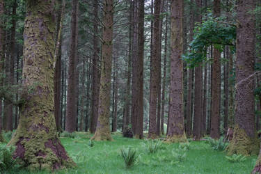 Green Forest by PhoenixKiara