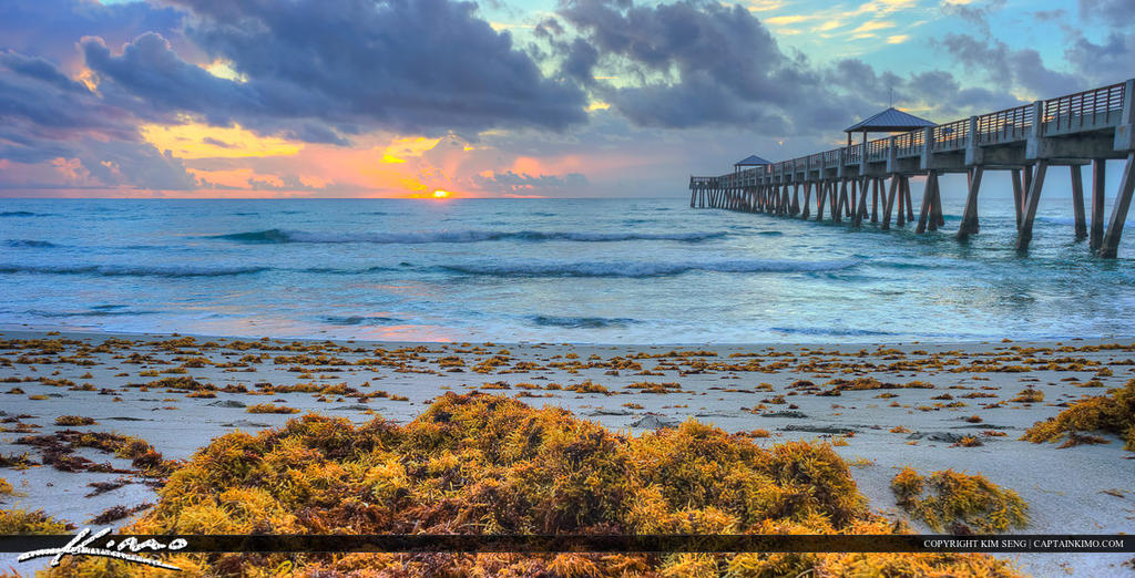 Seaweed along beach at juno fishing pier by captainkimo on for Juno beach fishing pier