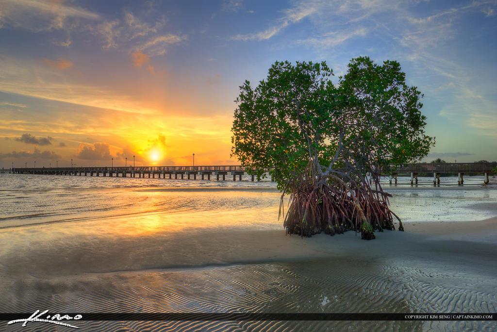 Jensen Beach Florida Jensen Beach Florida Mangrove