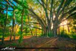 Banyan-Tree-with-Beautiful-Golden-Light