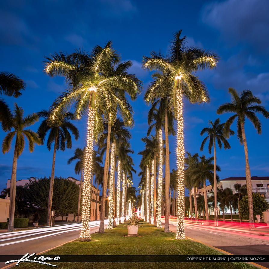 Royal-Palm-Tree-Christmas-Lights-Palm-Beach-Island By