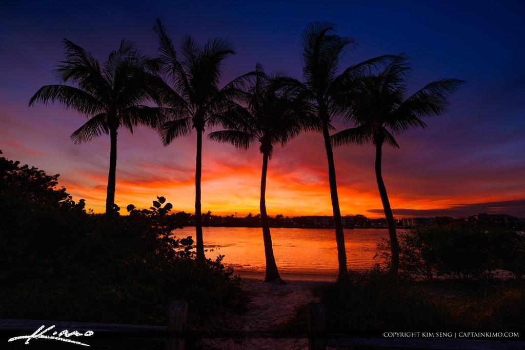 Jupiter Island Coconut Trees along the Waterway Su by CaptainKimo