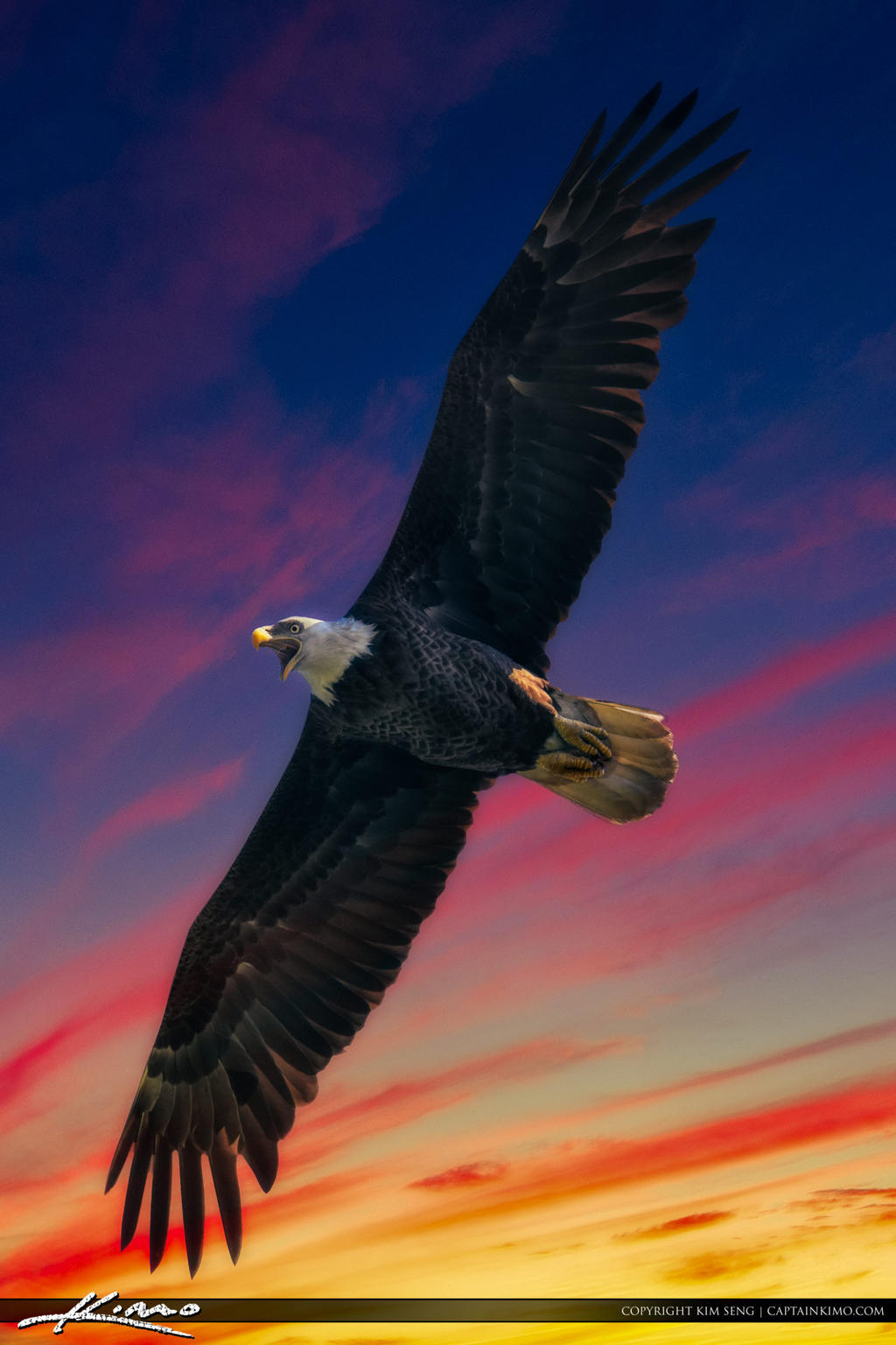 American-Bald-Eagle-with-Bright-Colored-Sky by CaptainKimo