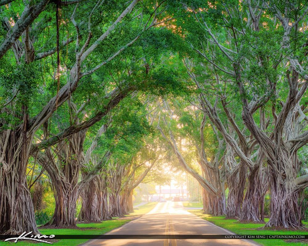 Bridge-Road-Tree-Canopy-Hobe-Sound-Florida by CaptainKimo