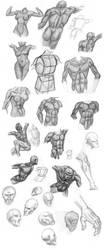 Anatomy Sketches by JackEavesArt