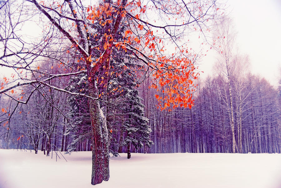 Colouring the Winter by Liudochka