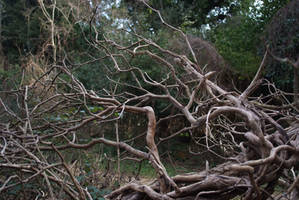 Dry Branches 2 by Very-Free-Stock