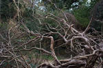 Dry Branches 2