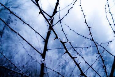 Darkly  Thorn
