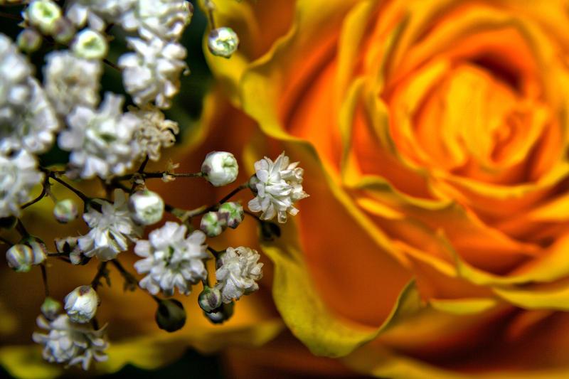 Flower And Babies by Artistic-Dodger on DeviantArt