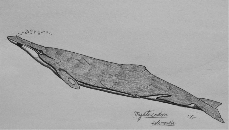 Mystacodon selenensis by AcroSauroTaurus