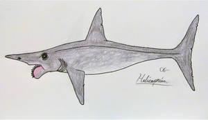 Helicoprion davisii by AcroSauroTaurus