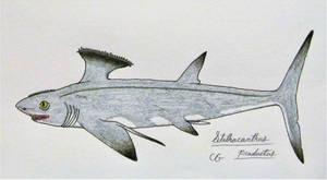 Stethacanthus productus by AcroSauroTaurus