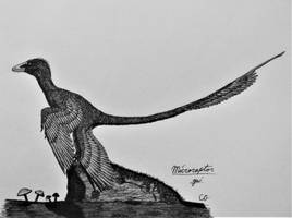 Inktober 2017 #1: Microraptor gui