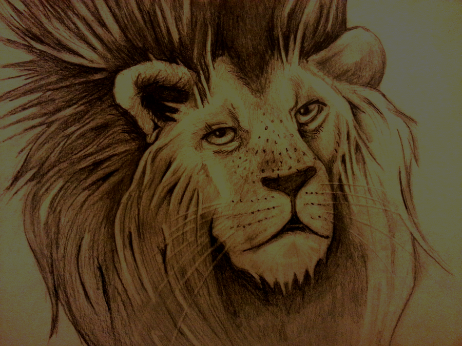 Lions Fire by Brynios