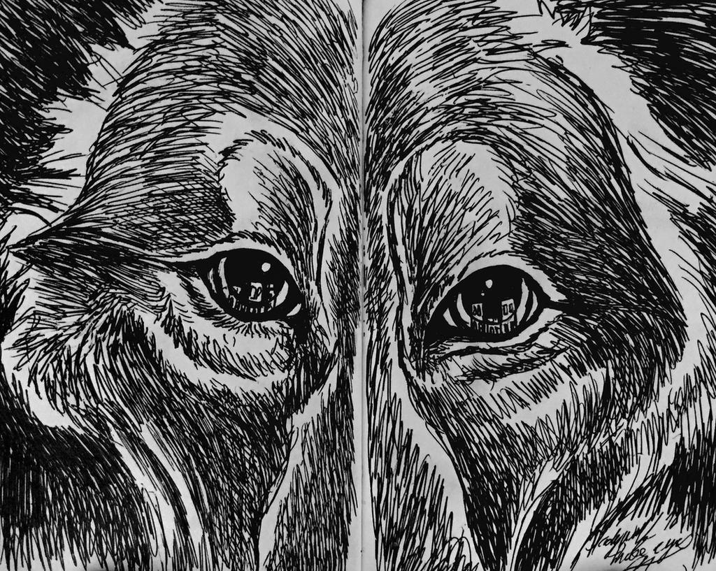 Those eyes by pladywolf82