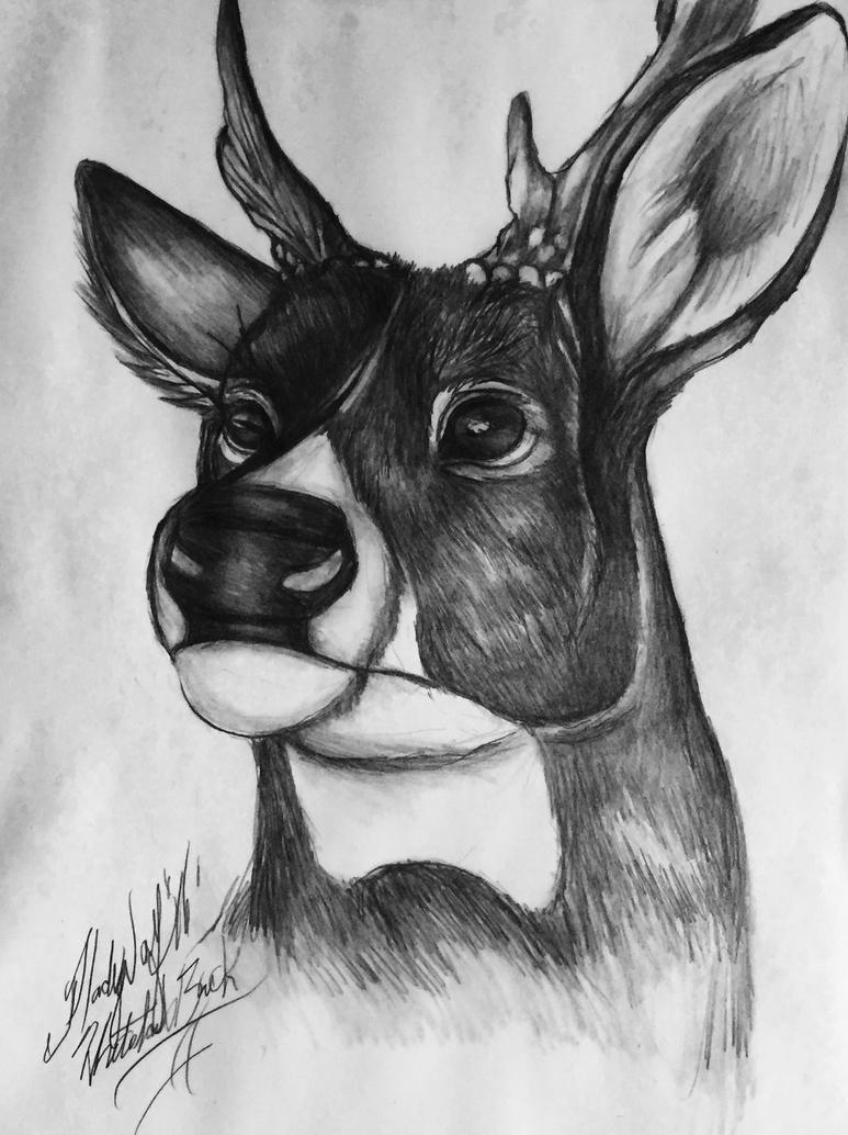 Alert buck by pladywolf82