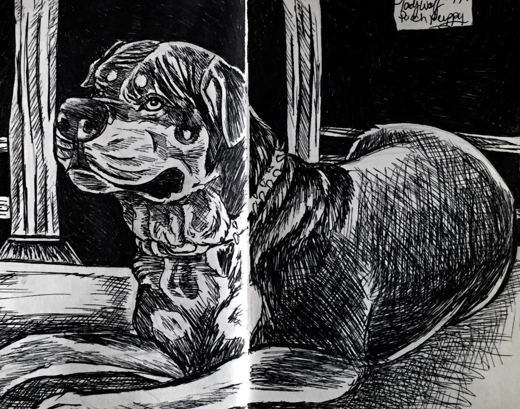 Porch puppy by pladywolf82