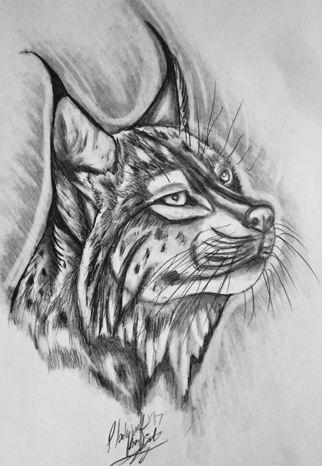 Bobcat bust by pladywolf82