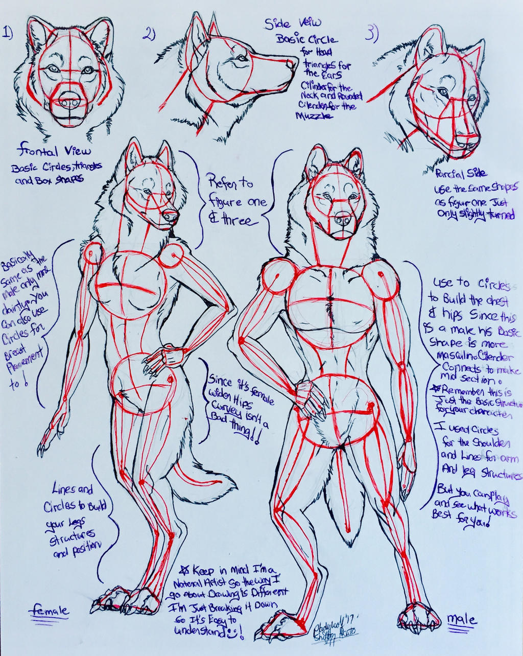 Anthro tutorial  by pladywolf82
