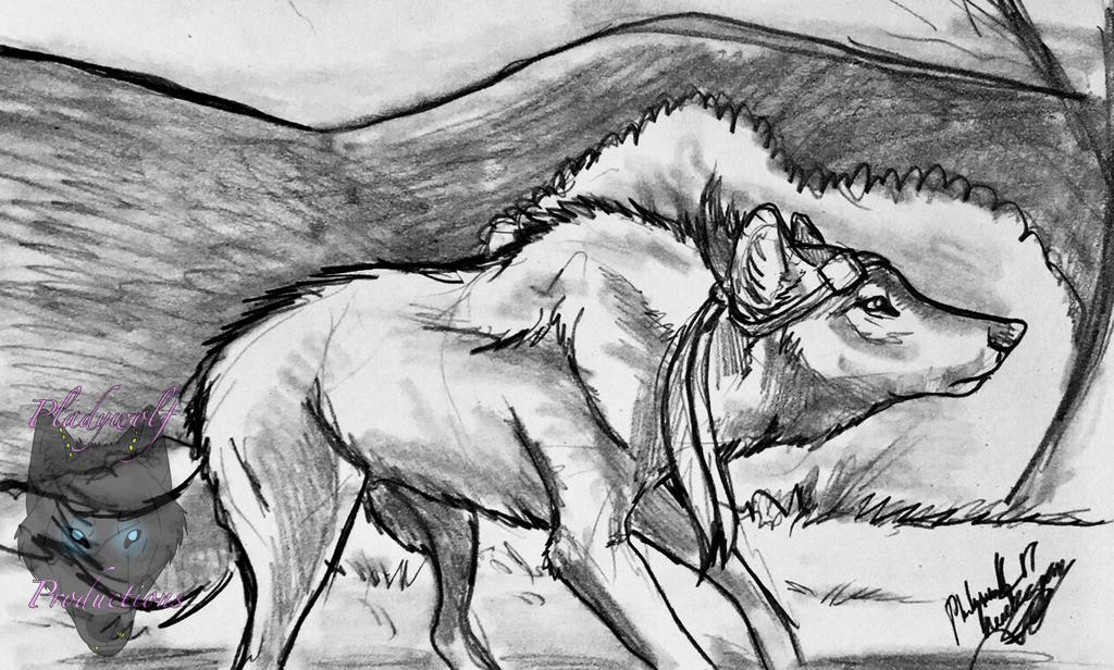 Run by pladywolf82