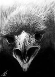 Hawk by BojanPapic