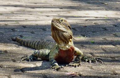 Dragon claws by iskarlata