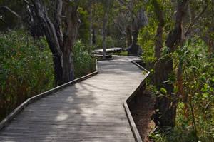 Forest path by iskarlata